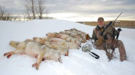 coyote-hunting-tips