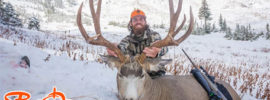 backcountry mule deer tips