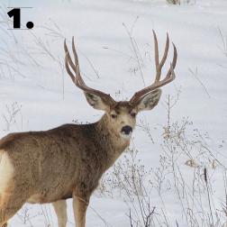 Buck Number 1