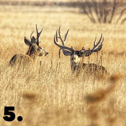 Buck Number 5